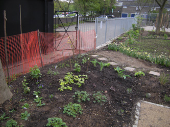 Newly planted perennials